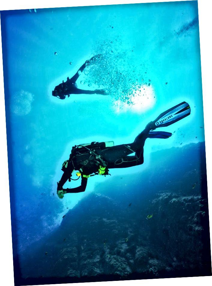 Arian Azarbar - Hawaii là một điểm đến tuyệt vời để khám phá tất cả các loại sinh vật biển trong khi lặn biển.