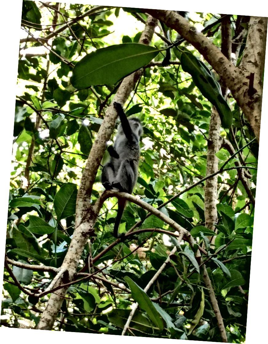 Кокоси та мавпи