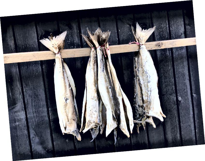 Rüzgarla sertleşen balık, bir başka popüler Faroese yemeğidir. Bana göre fotoğraf.