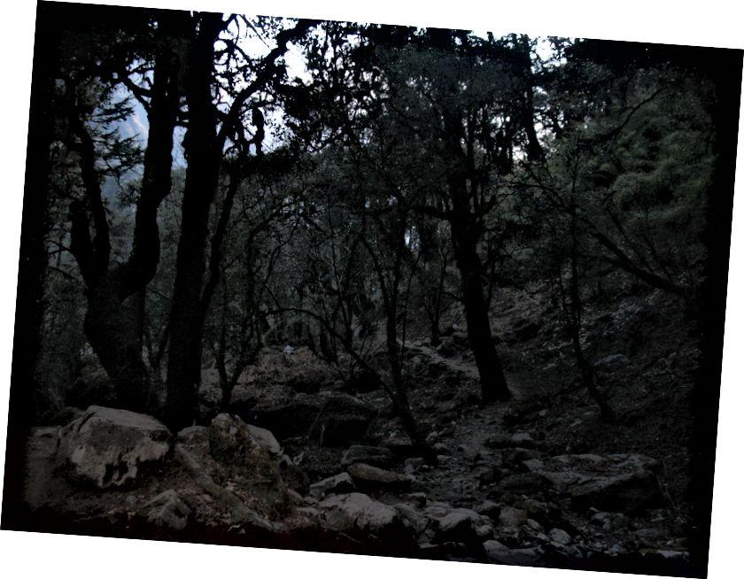 Mind keset metsa ja pimedust hõljus