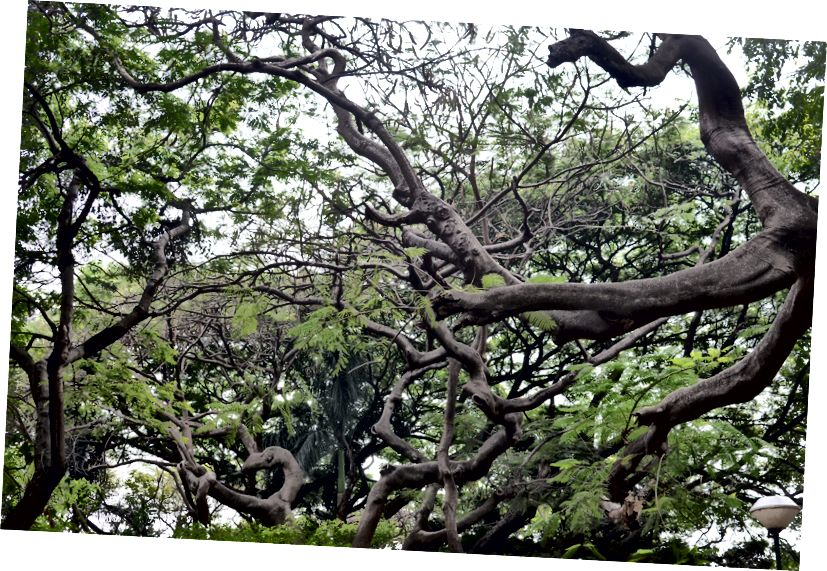 Neyse ki, kaldırımlar olmamasına rağmen, bol miktarda muhteşem ağaç var.