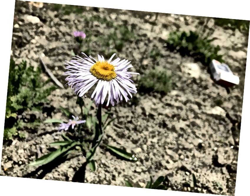 Польові квіти в кемпінгу Хушпанг