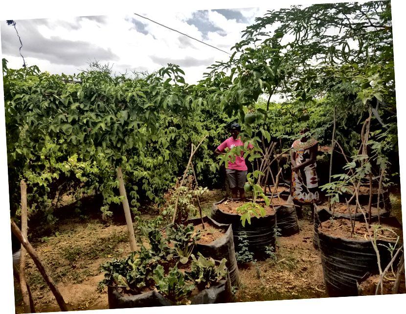 Trang trại trái cây đam mê đẹp của họ!