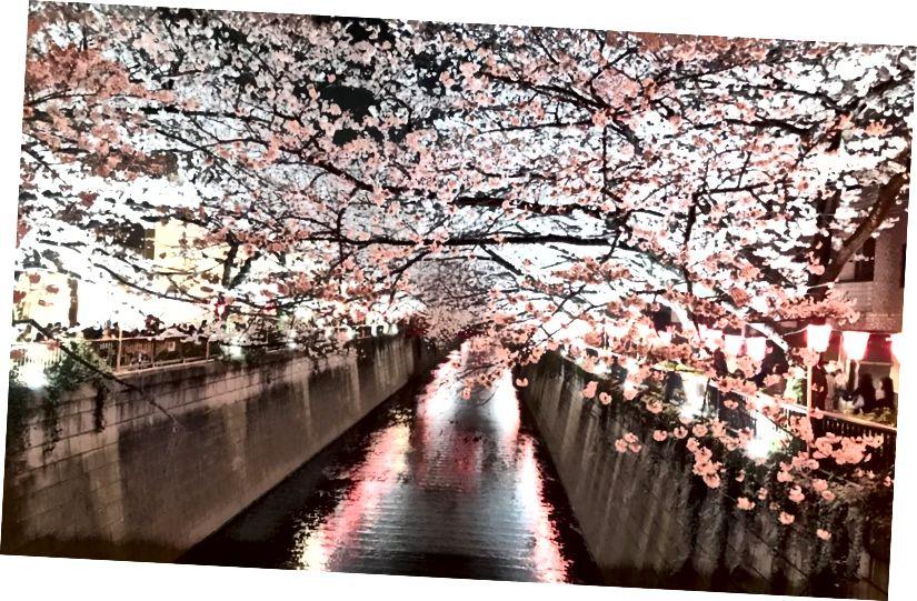 Hoa anh đào ở Tokyo - một bức ảnh được chụp từ Beyond Blocks rất riêng của Gabriel Yang.