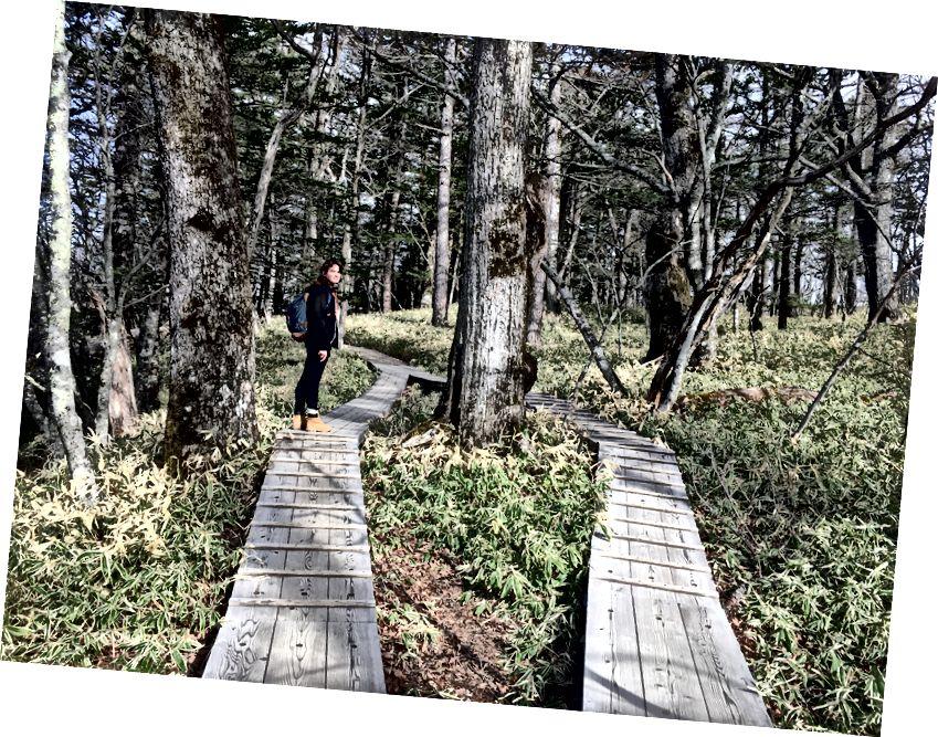 Nikko milli parkında koruma çalışmaları
