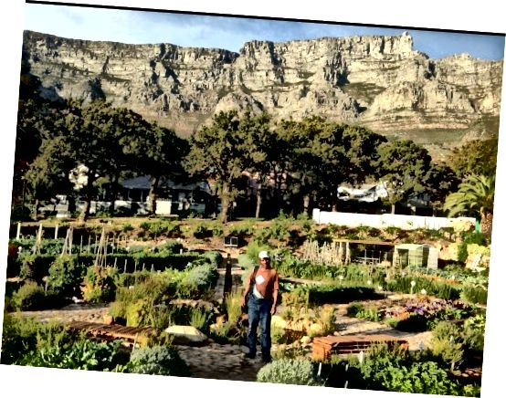 Fotoğraf kredisi: Oranjezicht City Farm
