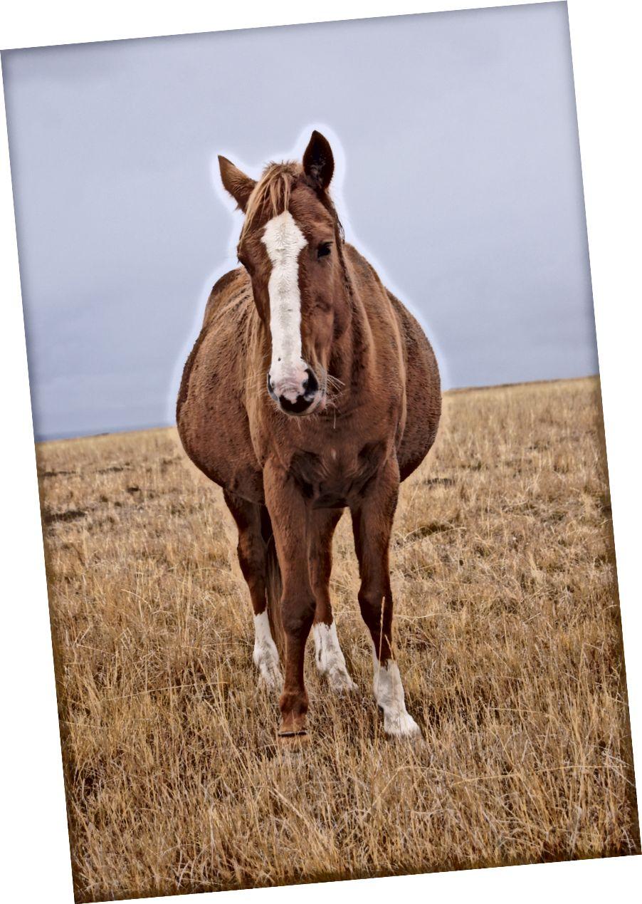 Mera adlı bir at.