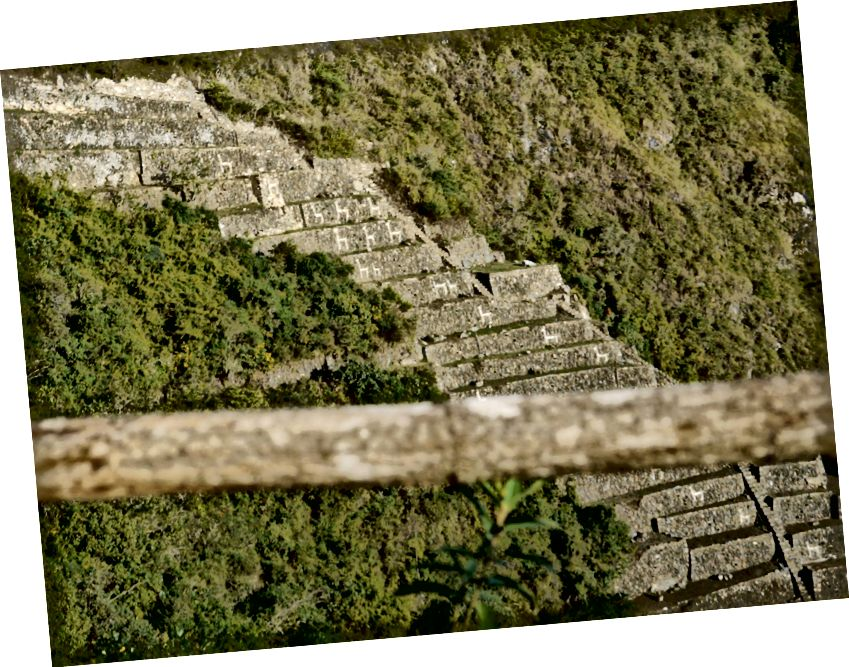 Llama Terraces di Choquequirao