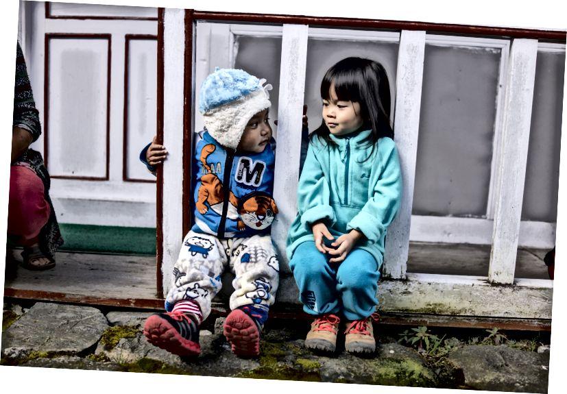 Chow nhỏ chạy trốn khỏi một con gà và cosies cho đến một đứa trẻ địa phương.