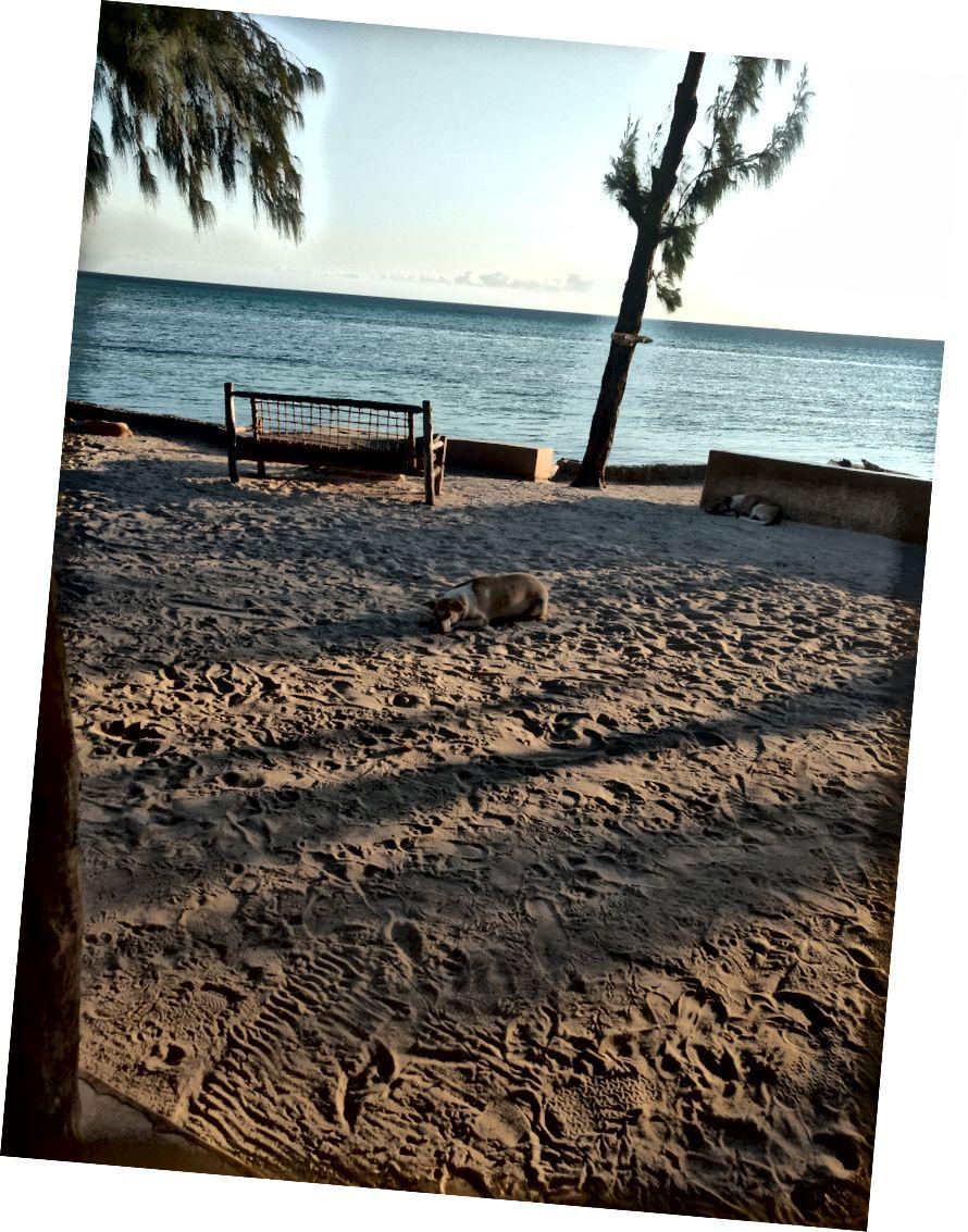 Doggies từ nhà nghỉ khác ngủ trên cát.