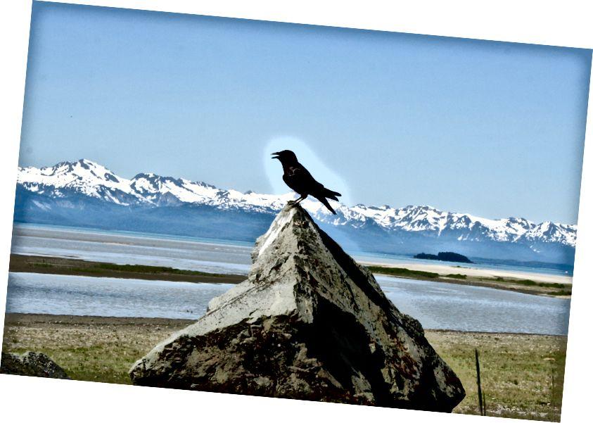 Yéil, Dzantik'i Héeni'deki (Juneau) Eagle Plajı'nda (ch'áak 'adını aldı) konuşuyor