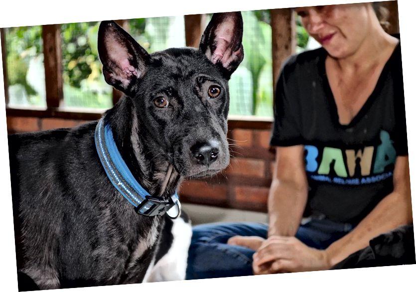 Nhà nuôi chó con BAWA | © Nikki Vargas