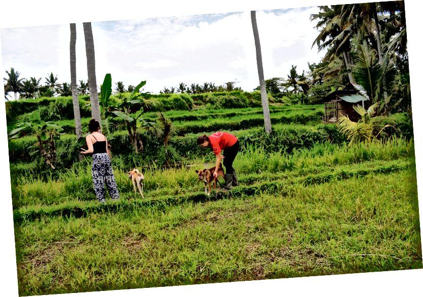 Đi bộ giải cứu qua cánh đồng lúa | © Nikki Vargas