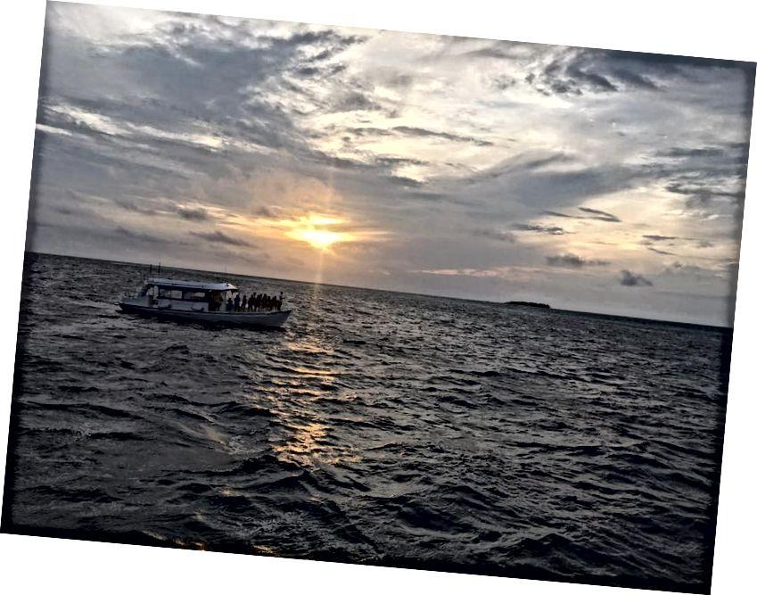Yunuslarla günbatımı gezisi