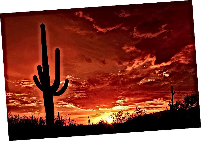 Saguaro Resimleri