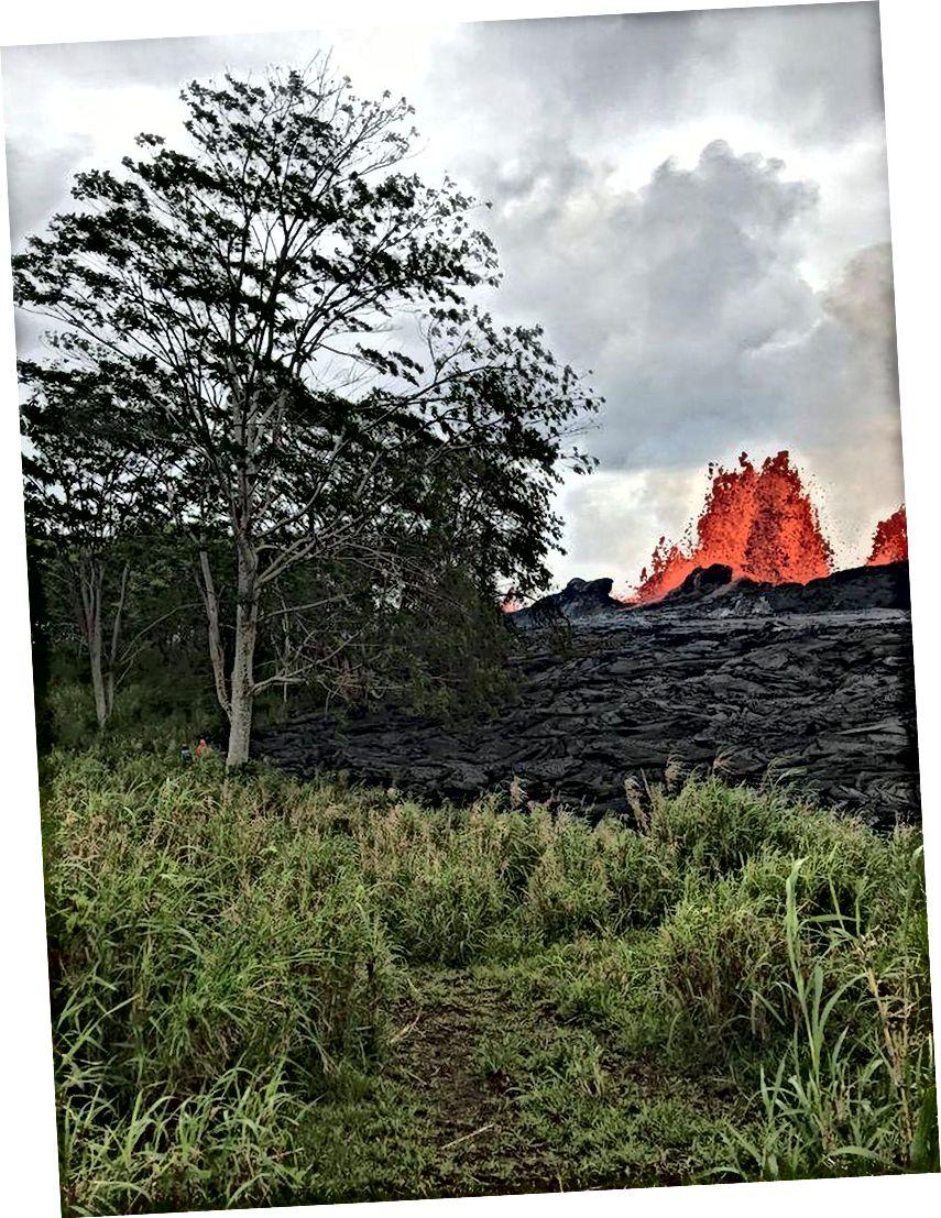 Лава видовищно вивертається з тріщини 22, піднімається над повільно зростаючим лава-бермом нового матеріалу, що виходить із відтоку. Дерево на передньому плані заввишки понад 60 футів, як видно із шкали двох вчених-людей поруч. (USGS-HVO)