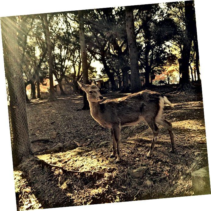 Jelen v Nari
