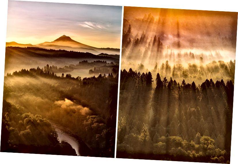 Як штрихи пензля художника, туман рано вранці підфарбовує Національний ліс Маунт-Гуд.