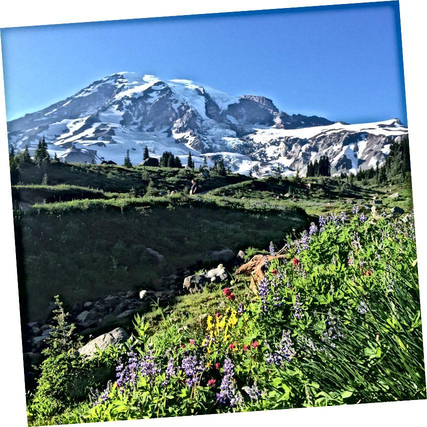 Mount Rainier Paradise Inn bir görünüm. Fotoğraf yazar.