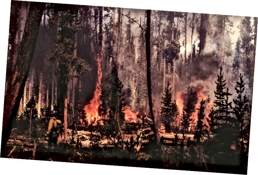 Şelalenin ateşinde yanma; Kathy Peterson; Temmuz 1988; Yer ateşi; NPS.gov