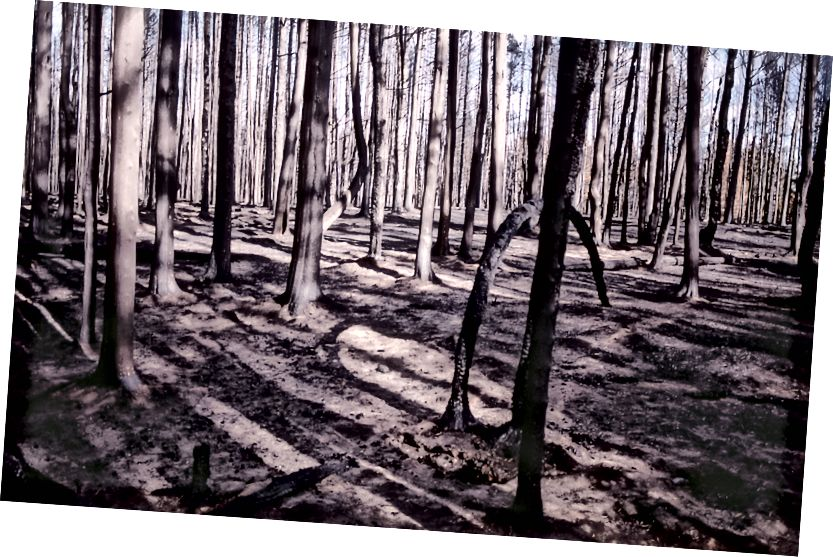 Yanmış orman; Jim Peaco; 1988; NPS.gov