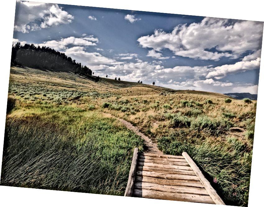Uysal bir yer yok; Blacktail Geyik Deresi Patika, Yellowstone