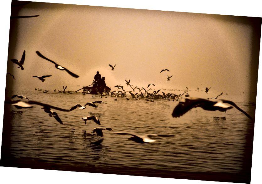 طيور النورس والضباب على نهر الغانج ، الصورة © Erika Burkhalter