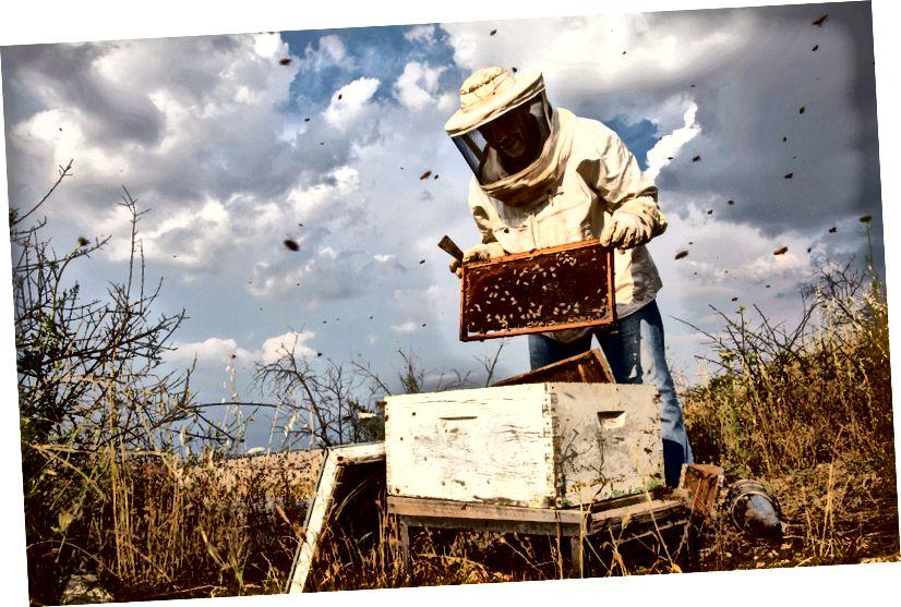 Đi nuôi ong trong làng đỉnh núi Umm Qais (dân số: 7.000) với người dẫn chương trình Airbnb Experience Experience Yousef Al Sayah và ba triệu đối tác kinh doanh thiểu số của anh ấy.