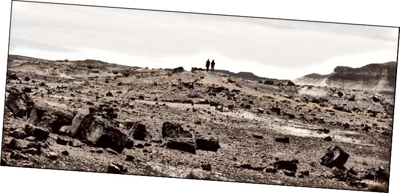 Пейзаж з фігурами, скам'янілий ліс, AZ 4–11–2018