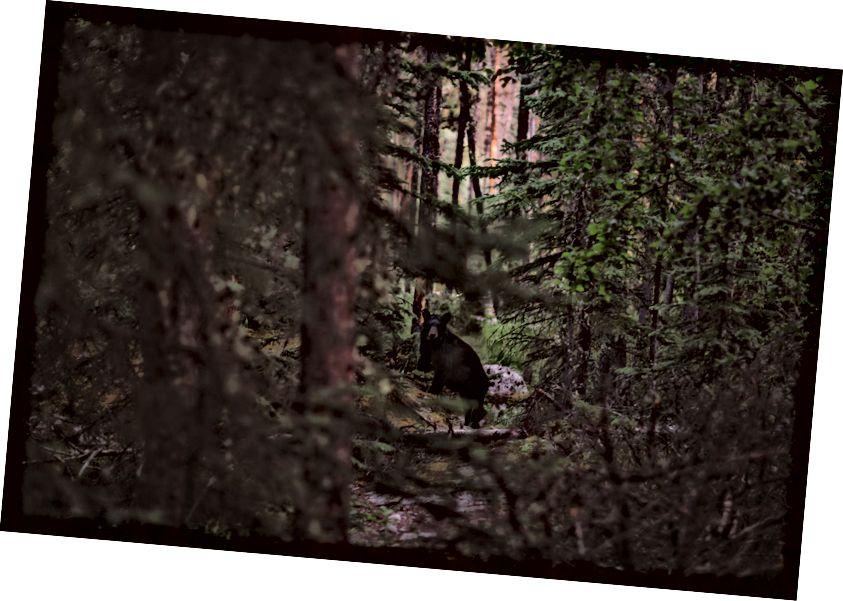 Қарау соқтығысып, тыныс алу тоқтайды. Қорқынышты. Жаспер ұлттық паркінің шөлінде осындай сәттерді бастан өткерді