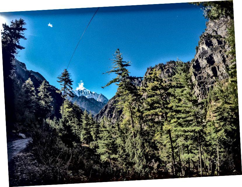 Berjalan di tengah hutan alpine menangkap pandangan pertama Annapurna II