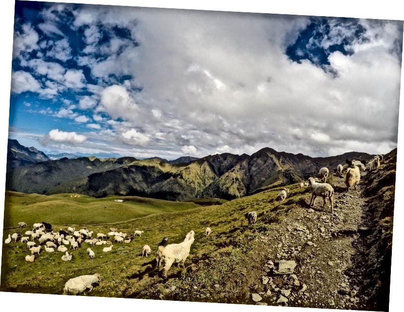 Đi bộ lên dốc từ Bedni Bugyal đến Patar Nachauni