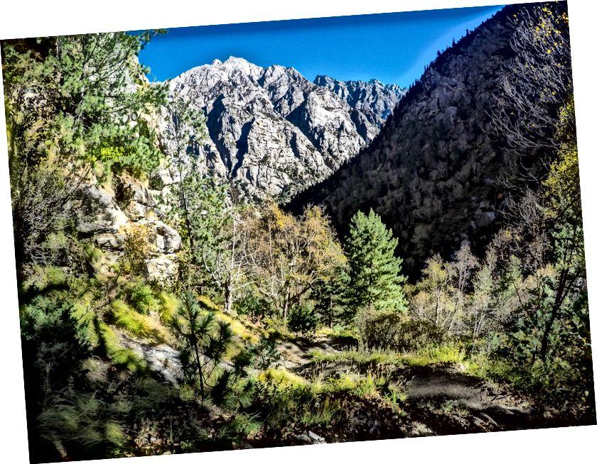 Όμορφο αλπικό δάσος στην είσοδο Kedar Tal / Thalay Sagar