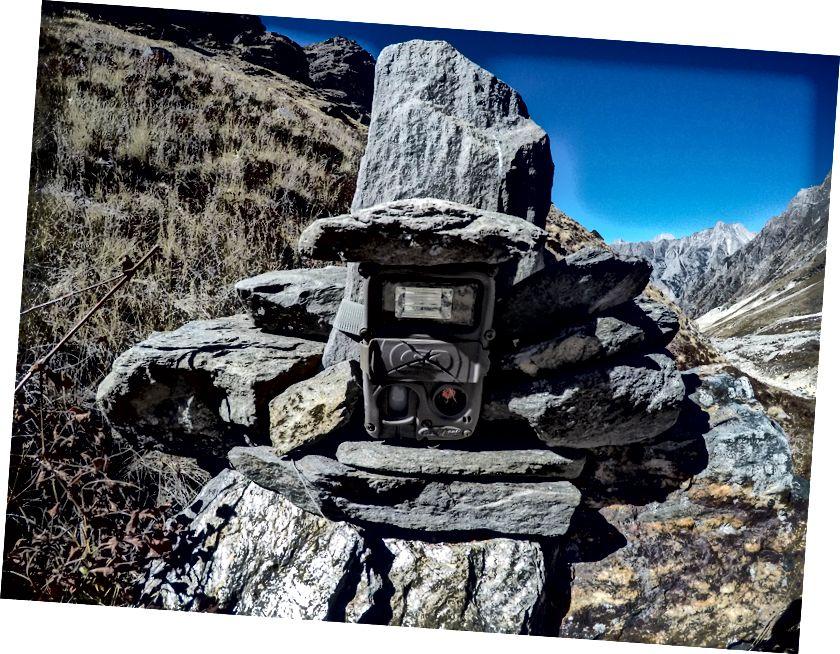 Kamera s senzorjem gibanja za snežne leoparde.