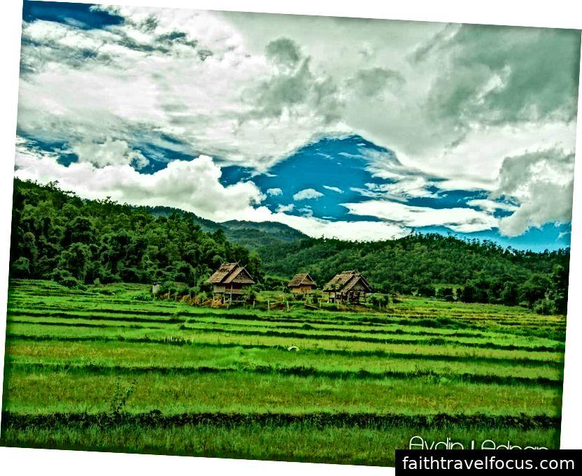 Quang cảnh cánh đồng lúa của làng Pam Bok vào khoảng tháng 6 năm 2018. Ảnh tín dụng: Aydin Adnan