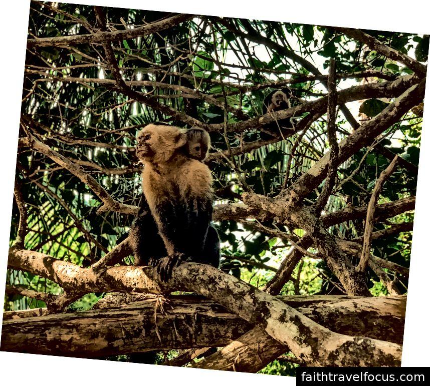 Nhìn thấy những con khỉ này, đặc biệt là những bà mẹ có em bé bám trên lưng là sở thích của chúng tôi!