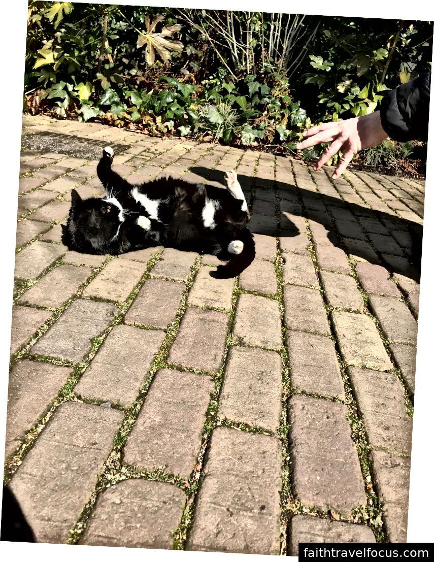 Một con mèo vườn thú thân thiện