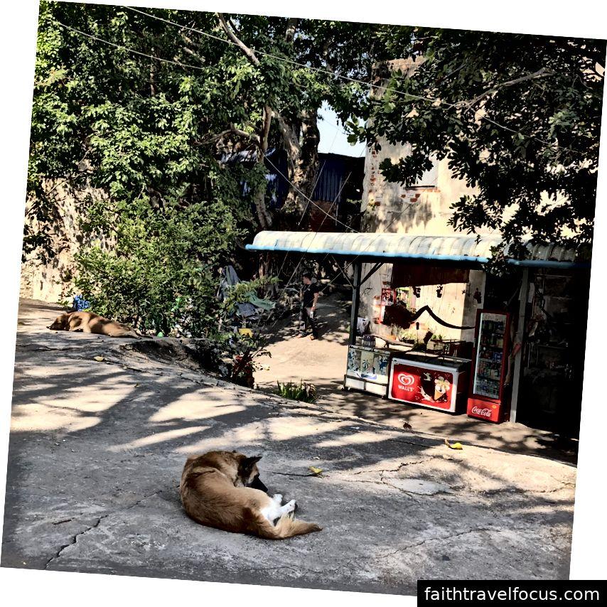 Một con chó chillaxing khác .. những con chó này có một cuộc sống tốt