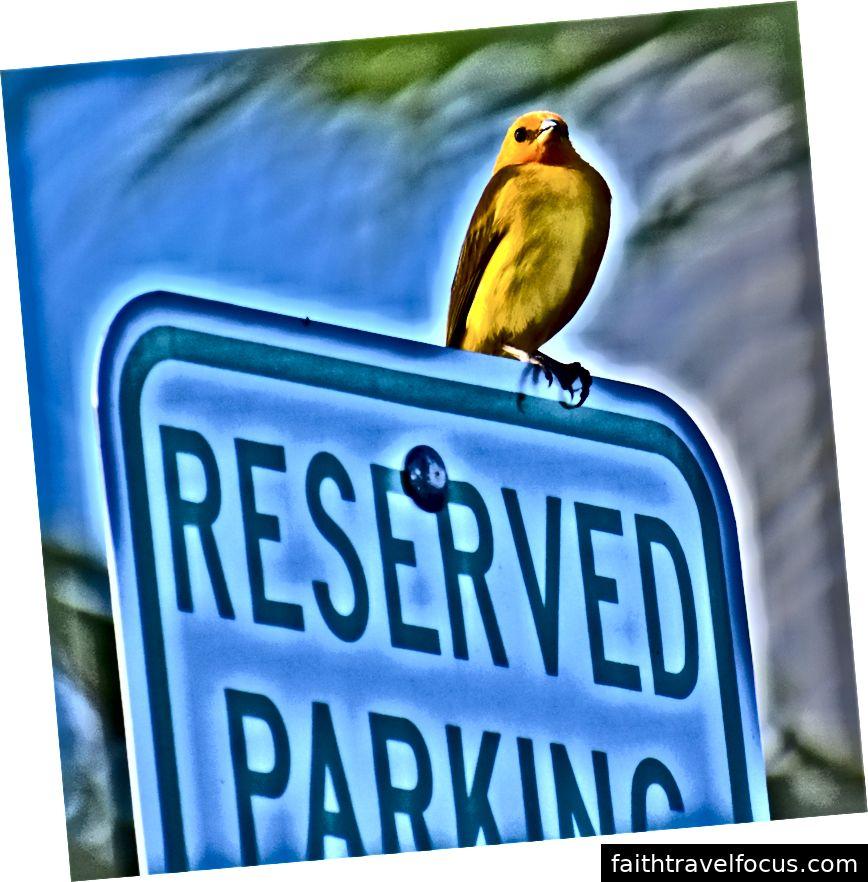 bjf © Công viên bãi biển Isaac Hale, Hawaii - hiện tại không có bãi đậu xe nào dung nham bao phủ lối đi
