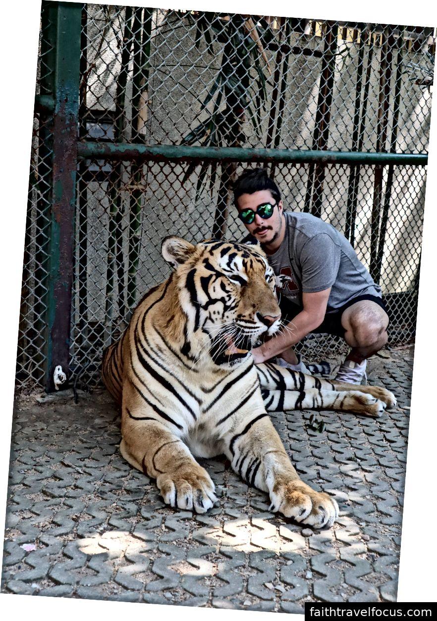 Tôi và Pepsi con hổ