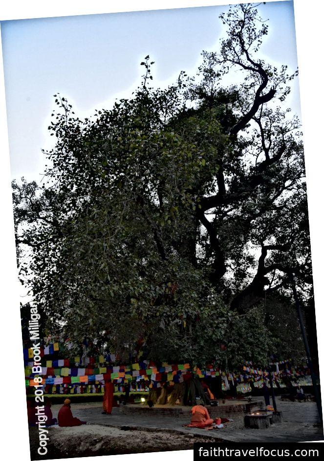 Các tu sĩ mặc áo choàng và nghệ tây tụ tập dưới bức tượng bồ đề (ống) đang trang trí với cờ cầu nguyện