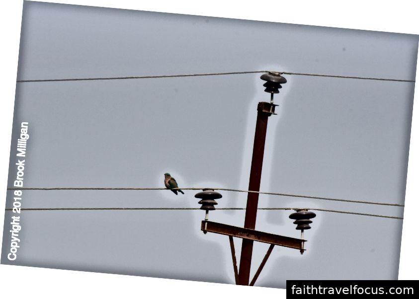 Những con chim này là tất cả các quan điểm tuyệt vời thông qua ống nhòm của chúng tôi. Thật vui khi để tài xế của chúng tôi nhìn thấy chúng qua ống nhòm của chúng tôi. Anh ta nhìn hoài nghi. Anh ấy không nói tiếng Anh và tôi chắc chắn anh ấy nghĩ chúng tôi là người dở hơi nhưng anh ấy thích ngắm nhìn những chú chim.