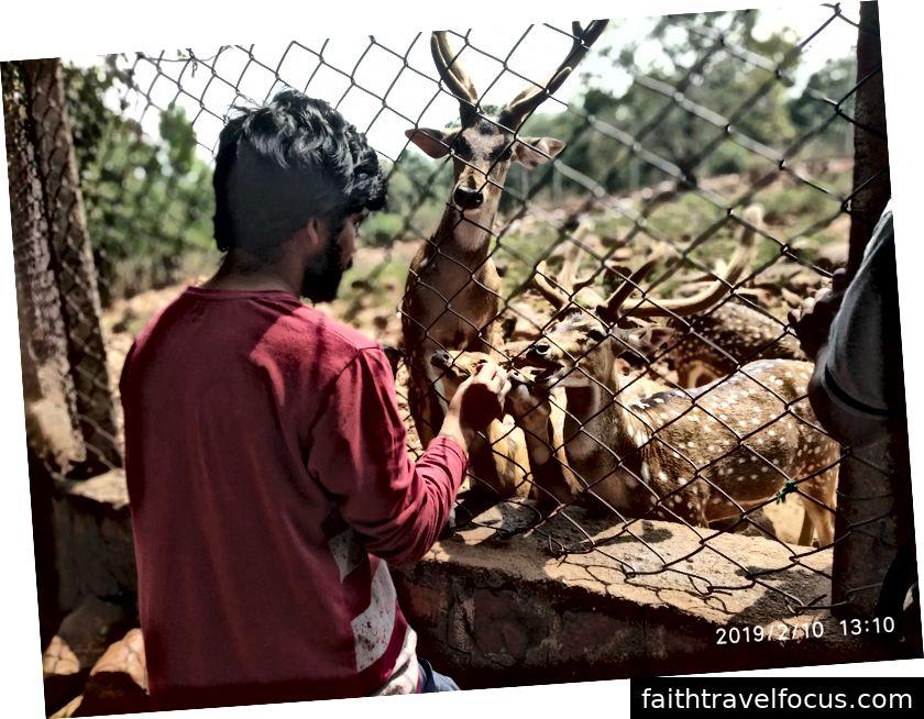 Tín đồ phục vụ thức ăn cho hươu