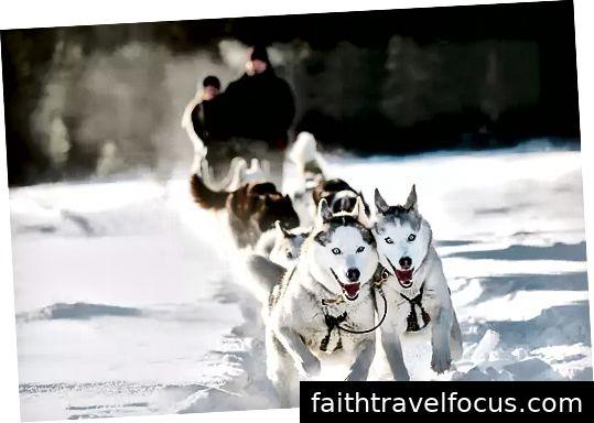 https://www.snowyowltours.com/copy-of-tours