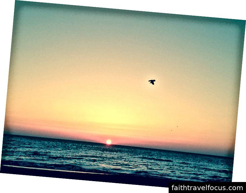 Bir kuş şafağı selamlar, Virginia Beach, 2014, HPEB