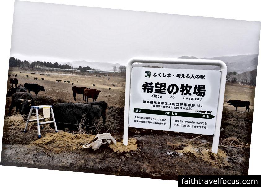 Rất nhiều gia súc trong trang trại tự do