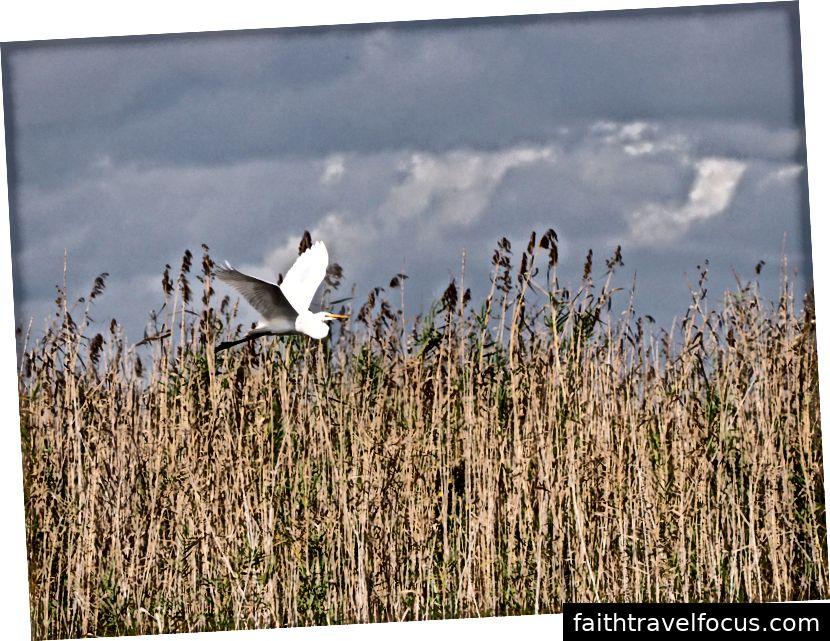Egret bay bằng