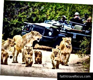 Vườn quốc gia Kruger Krugernationalpark.org.za