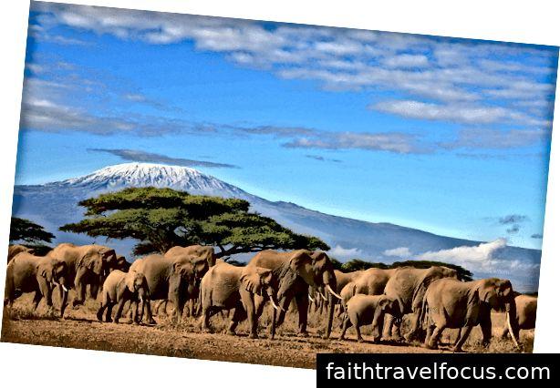 www.cats-africa.com - Mt. Kilimanjaro, Vườn quốc gia Amboseli