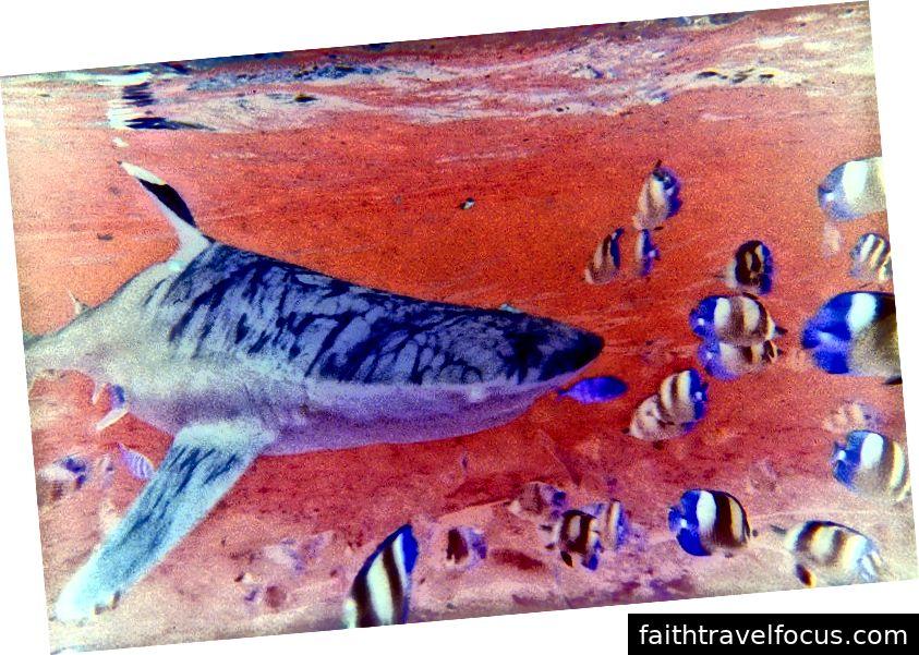 Chum đẫm máu trong bức ảnh nước của Mary McGrath